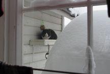 Norske katter (bare mine bilder)