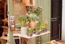 Beautiful flower shops
