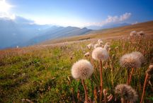 Alpine nature photography / shots of the wonderfull nature on the mountains :)