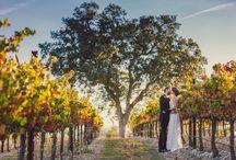 Central Coast Vineyard Wedding Inspiration / Inspiration from Vineyard Weddings in Paso Robles, San Luis Obispo, and Santa Barbara.