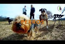 videos perros