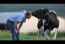Life on the Farm / We love our farmers and cows!  Come meet the family! / by Horizon Organic