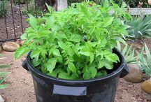 Zahradka-tipy na pestovanie