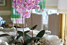 Plants / Mainly orchids