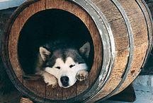 Cool Pet Homes