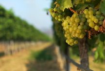Travel n' Wineries / We take you on a journey to wineries, vinyards around the world. Come and explore them along with us.