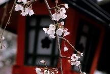 Orient - Japonia