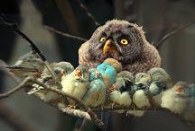 Birds Beautiful / by Bridget Livingston Smolen