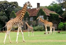 Amazing Safari Lodges & Game Reserves / Places you might want to stay if you are planning a safari  / by OneWorld365 Travel