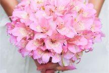 Buquê (Bouquet)