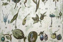 botanicals / by Leslie Kokesh