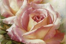 güller / çiçekler