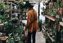 PLANTS FW