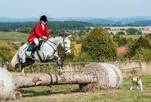 Koně v Benicích