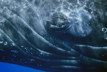 Whales & Dolphins... / by Ruth McEwen