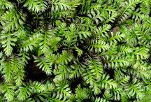 VCI Greenscape