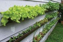 Green & Growing Things