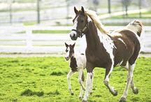 ♘ Horses ♘