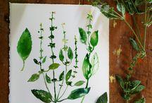 fruit & veg illustration / by Joom K