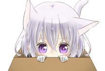 刀剣乱舞 箱入り猫
