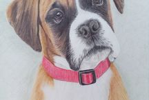 Dog portraits / A collection of my own artwork in colour pencils,  dog commissions