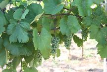 #txwine In the news