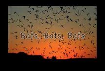 Science - Bats
