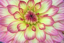 I flower