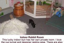 Pour mon bébé lapin & bébé rat