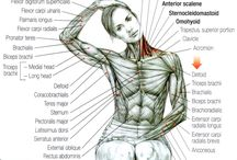 Trapezius stretching