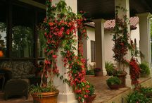 Outdoor Design Plants