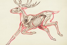 Drawing Reference    DEER
