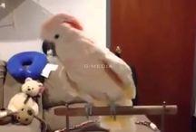 bird mad