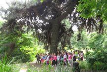 Zespół Szkolno-Przedszkolny w Łukcie - •wycieczka do Skansenu i  Muzeum Pszczelarstwa w Swarzędzu