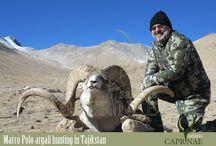 Marco Polo argali hunting in Tajikstan