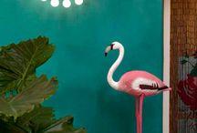 Flamingo  / #pink