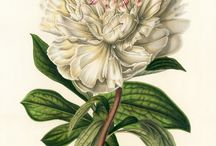 Flowers vintage books illustration