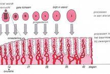 Biologie voortplanting mens