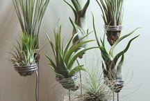 växter gröna green