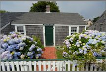 Spring time / Hydrangeas and flowers on beachy Cape Cod, Marthas Vineyard, Nantucket, and Long Island
