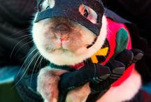 Animals Dressed up / Is there anything more adorable than your pet?  Of course!  Your pet in a costume!