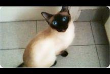 Funny & Cute Cat Videos