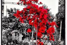 Flowers +