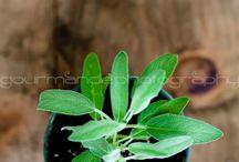 Herbs & Gardening / by Julie Pechon