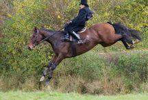 Side Saddle / Riding Side Saddle