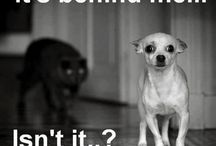 Funny Cats & Dogs