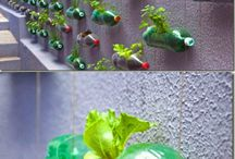 PET bottle garden