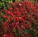 Kleuren in de tuin / Kiezen van kleuren in de tuin