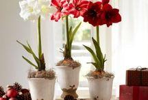 Растения дома и на даче