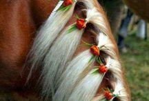 At / horse
